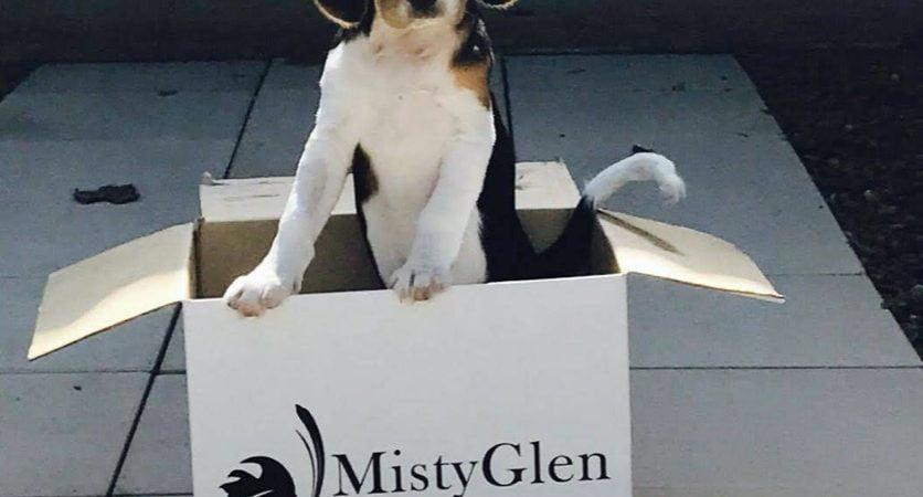 Tilly loved it at Misty Glen