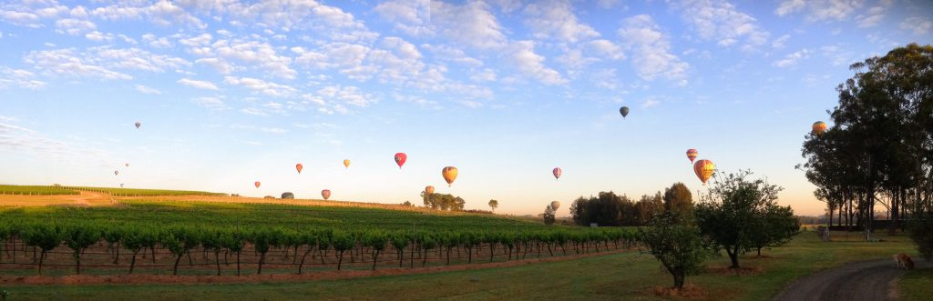 balloons over misty glen vineyard